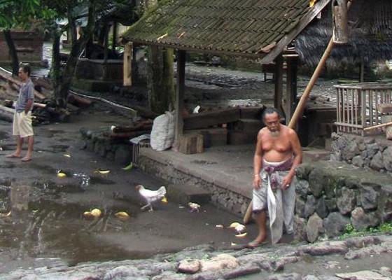 Nusabali.com - bali-aga-penduduk-asli-pulau-bali