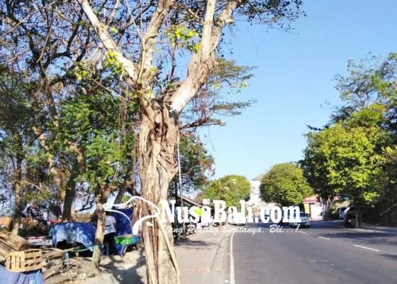 Nusabali.com - sudah-ditertibkan-pkl-kembali-berjualan