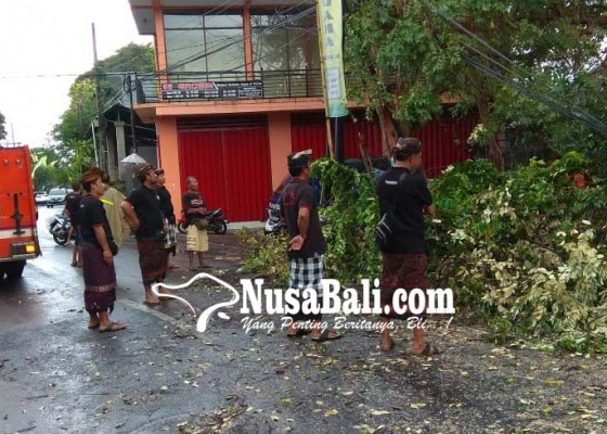 Nusabali.com - pohon-tumbang-kagetkan-warga-sanur