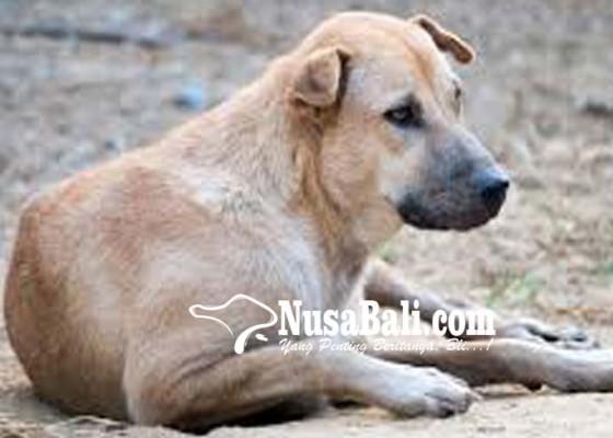 Nusabali.com - cemburu-pria-bunuh-anjing-milik-mantan-pacar