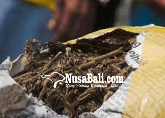 Nusabali.com - mantan-ipar-artis-hanya-terbukti-simpan-ganja