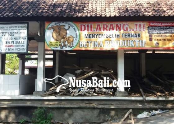 Nusabali.com - rph-sapi-di-tukad-unda-kurang-terawat