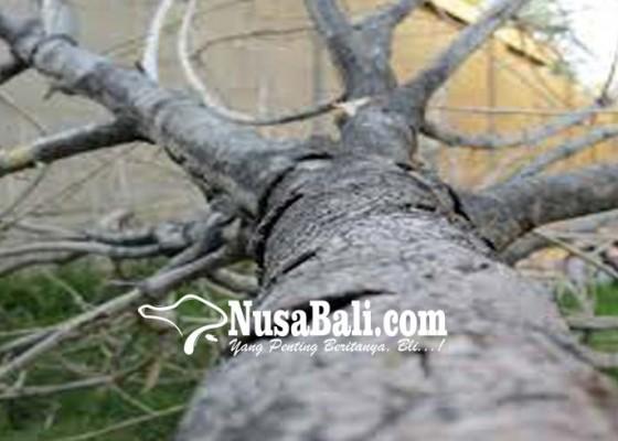 Nusabali.com - pohon-tumbang-timpa-warung