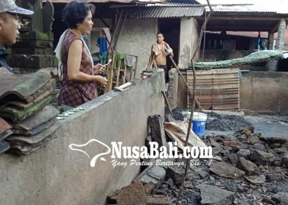 Nusabali.com - pohon-bunut-tumbang-enam-babi-hanyut