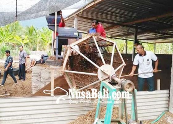 Nusabali.com - peternak-sapi-dilatih-produksi-pupuk-organik
