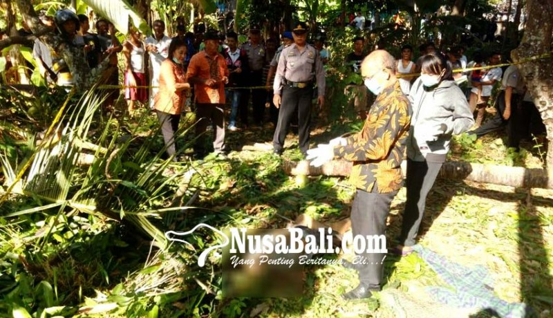www.nusabali.com-awasi-buruh-pekak-tewas-tertimpa-pohon