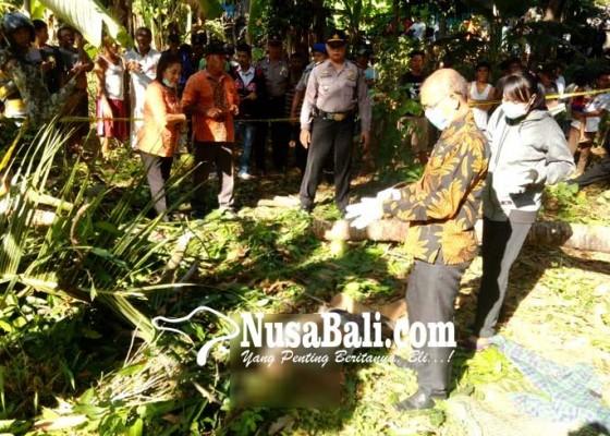 Nusabali.com - awasi-buruh-pekak-tewas-tertimpa-pohon