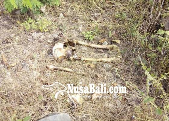Nusabali.com - kerangka-manusia-berserakan-di-hutan