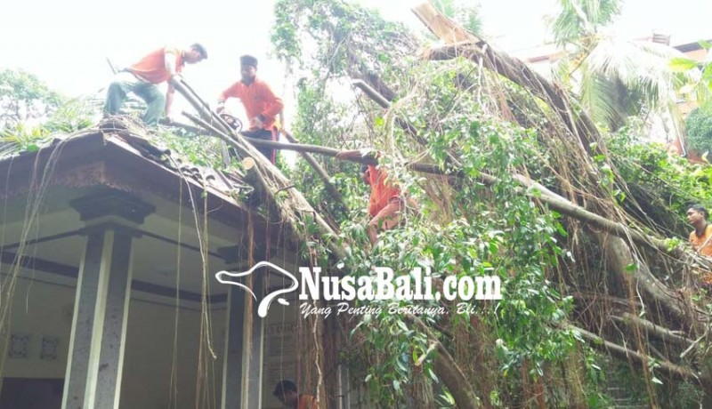 www.nusabali.com-pohon-tumbang-timpa-villa-di-ubud