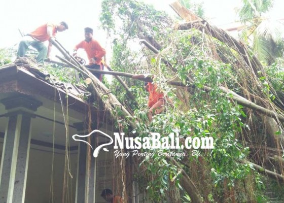 Nusabali.com - pohon-tumbang-timpa-villa-di-ubud