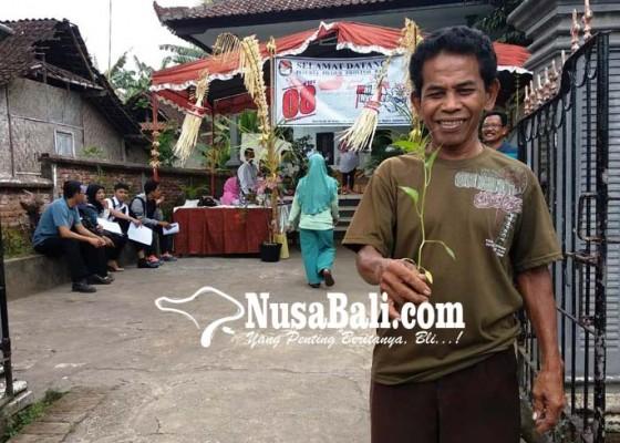 Nusabali.com - bertema-kondangan-usai-nyoblos-dapat-bibit-cabai