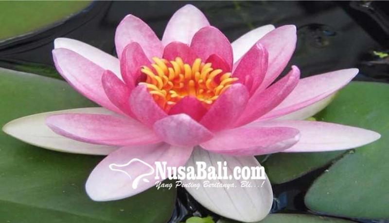 www.nusabali.com-lentera-membuka-pintu-harapan
