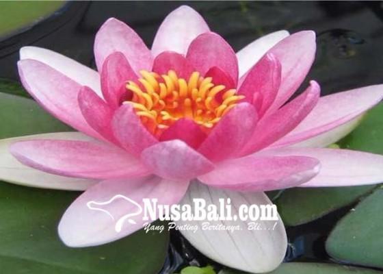 Nusabali.com - lentera-membuka-pintu-harapan