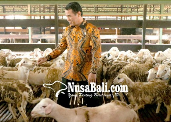 Nusabali.com - ekspor-perdana-domba
