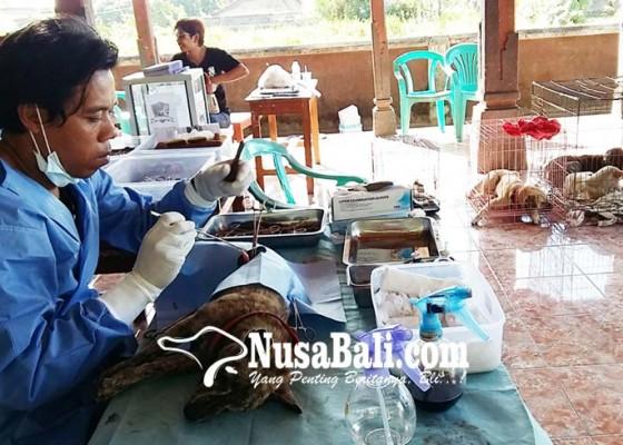Nusabali.com - digagas-desa-contoh-peduli-anjing