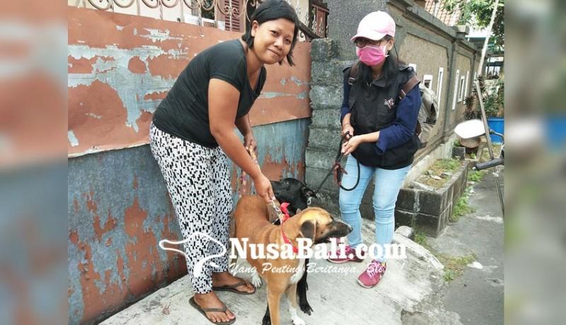 www.nusabali.com-vaksinasi-rabies-serentak-tahap-ix-di-kota-denpasar-mulai-dilaksanakan-hari-ini