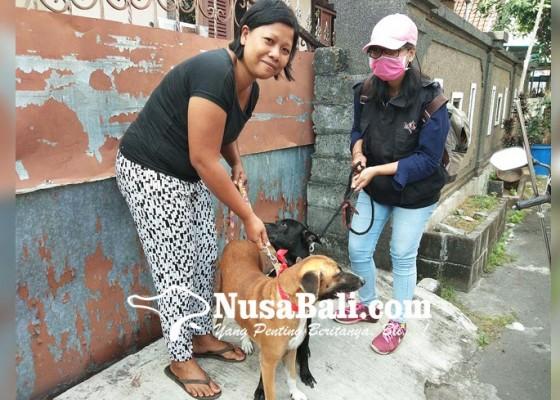 Nusabali.com - vaksinasi-rabies-serentak-tahap-ix-di-kota-denpasar-mulai-dilaksanakan-hari-ini