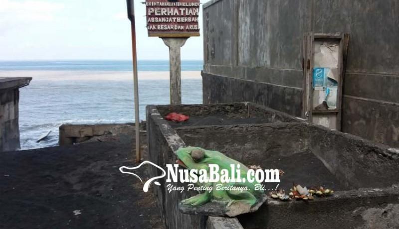 www.nusabali.com-penyu-sulit-bertelur-di-tegal-besar