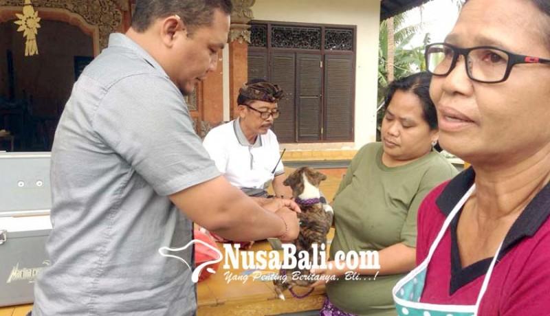 www.nusabali.com-dinas-pertanian-vaksin-7715-anjing