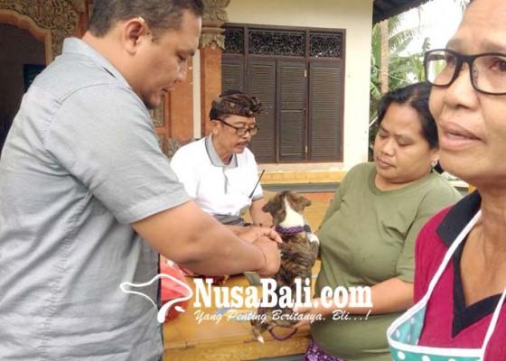 Nusabali.com - dinas-pertanian-vaksin-7715-anjing