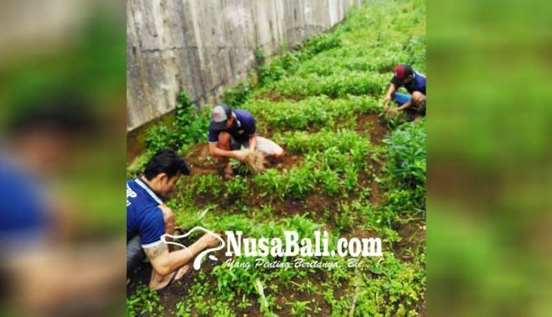 www.nusabali.com-anggaran-habis-lapas-kelola-kebun-sayur