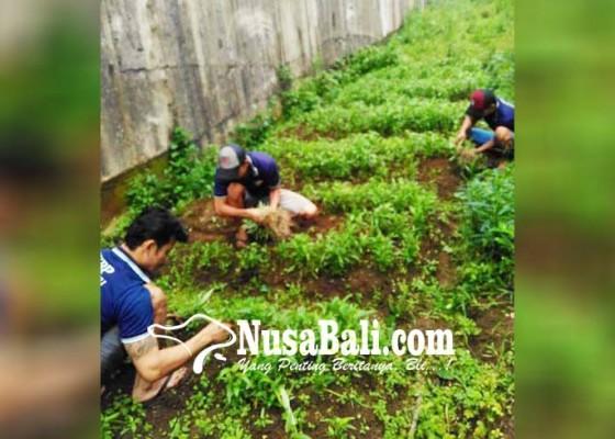 Nusabali.com - anggaran-habis-lapas-kelola-kebun-sayur