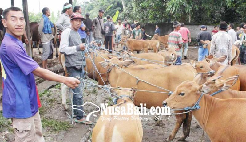 www.nusabali.com-potensi-besar-bisnis-peternakan-sapi-tertatih-tatih