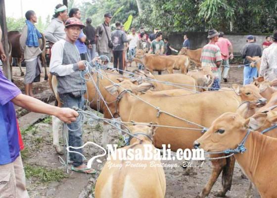 Nusabali.com - potensi-besar-bisnis-peternakan-sapi-tertatih-tatih