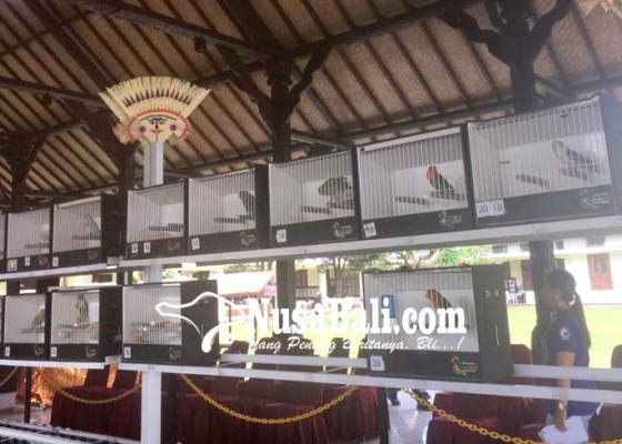 Nusabali.com - ratusan-pecinta-burung-ikut-kontes-beauty-bird