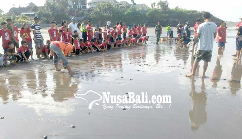 www.nusabali.com-sebanyak-75-tukik-dilepas-di-pantai-yeh-gangga