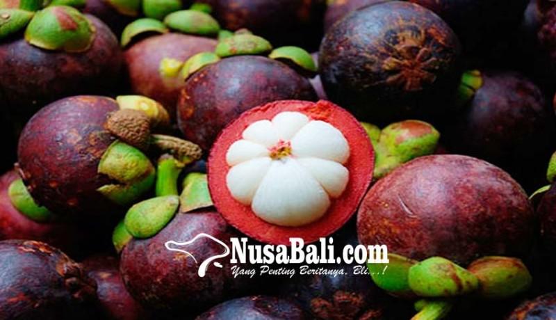 www.nusabali.com-permintaan-tinggi-ekspor-manggis-bali-tersendat