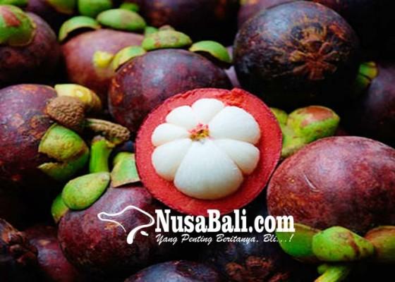 Nusabali.com - permintaan-tinggi-ekspor-manggis-bali-tersendat