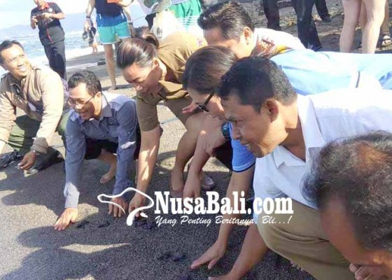 Nusabali.com - kapolres-ajak-wisman-lepas-70-tukik