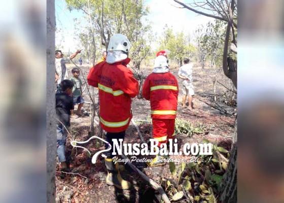 Nusabali.com - kebakaran-lahan-di-darma-winangun