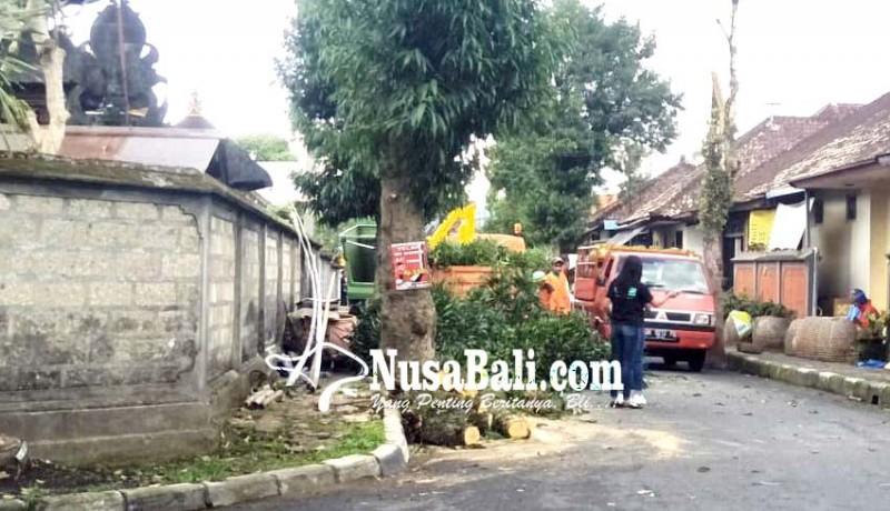 www.nusabali.com-dlh-kekurangan-tenaga-pemangkas-pohon