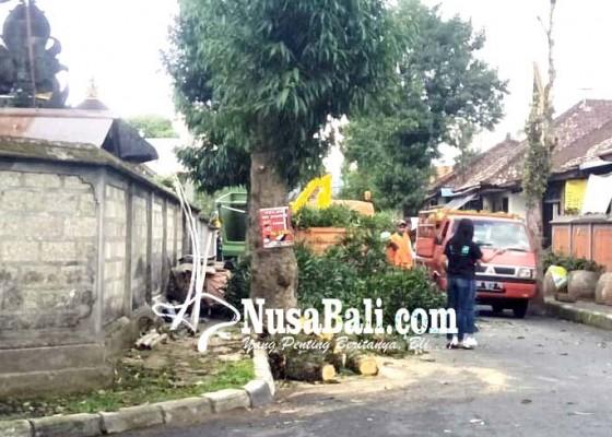 Nusabali.com - dlh-kekurangan-tenaga-pemangkas-pohon