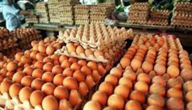 www.nusabali.com-harga-telur-terkerek-pakan-ayam