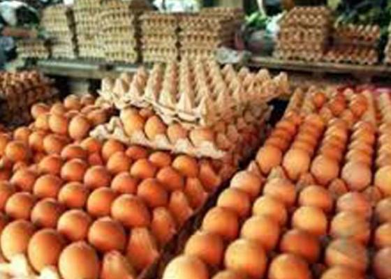 Nusabali.com - harga-telur-terkerek-pakan-ayam