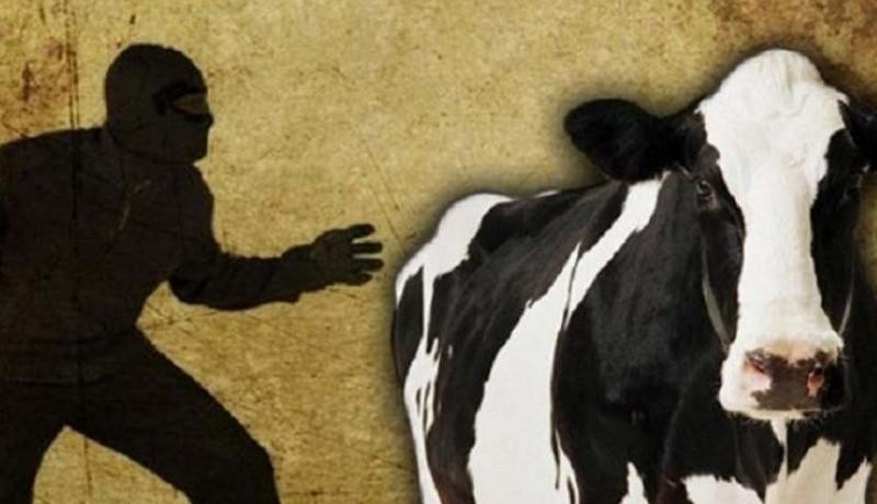 www.nusabali.com-komplotan-pencuri-ternak-masuk-jurang-1-tewas