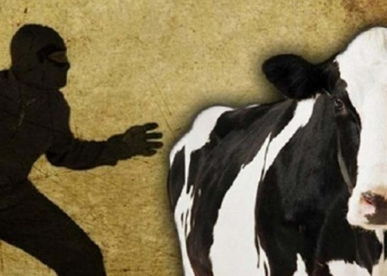 Nusabali.com - komplotan-pencuri-ternak-masuk-jurang-1-tewas
