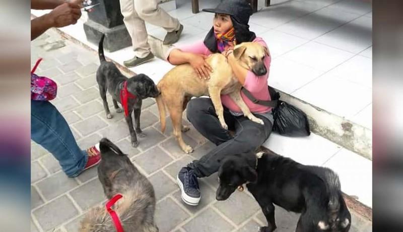 www.nusabali.com-ditemukan-dua-kasus-rabies-di-badung