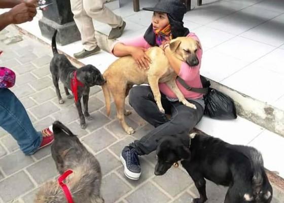 Nusabali.com - ditemukan-dua-kasus-rabies-di-badung