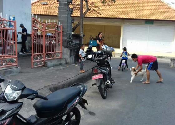 Nusabali.com - pasca-rabies-370-anjing-divaksin