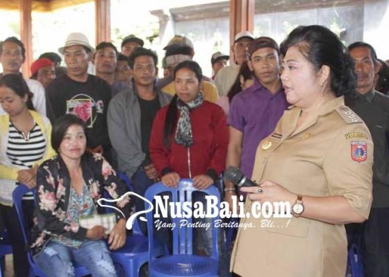 Nusabali.com - pengungsi-dilatih-dibantu-sapi-dan-alat-pertanian