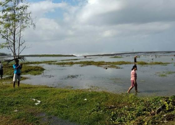 Nusabali.com - 7-ha-sawah-terendam-air-laut