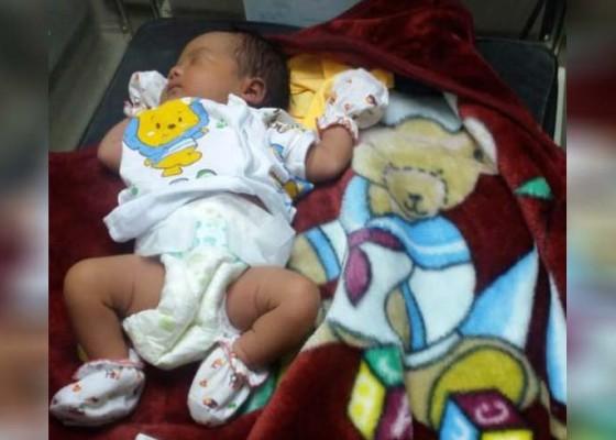 Nusabali.com - bayi-perempuan-dalam-kardus-gegerkan-mengwitani
