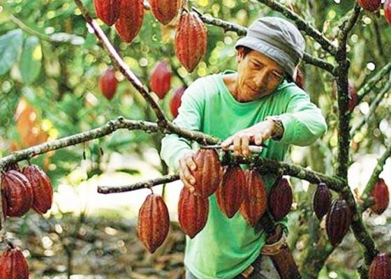 Nusabali.com - produk-coklat-olahan-masih-konsumsi-lokal