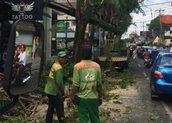 Nusabali.com - rompes-pohon-perindang-dinas-lhk-dapati-iklan-dipaku-di-pohon