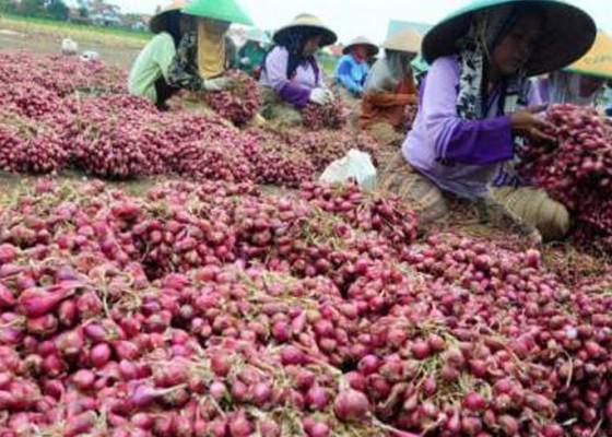 Nusabali.com - ri-ekspor-5600-ton-bawang-merah-ke-thailand