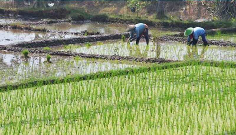 www.nusabali.com-dua-subak-tersertifikasi-sebagai-lahan-pertanian-organik
